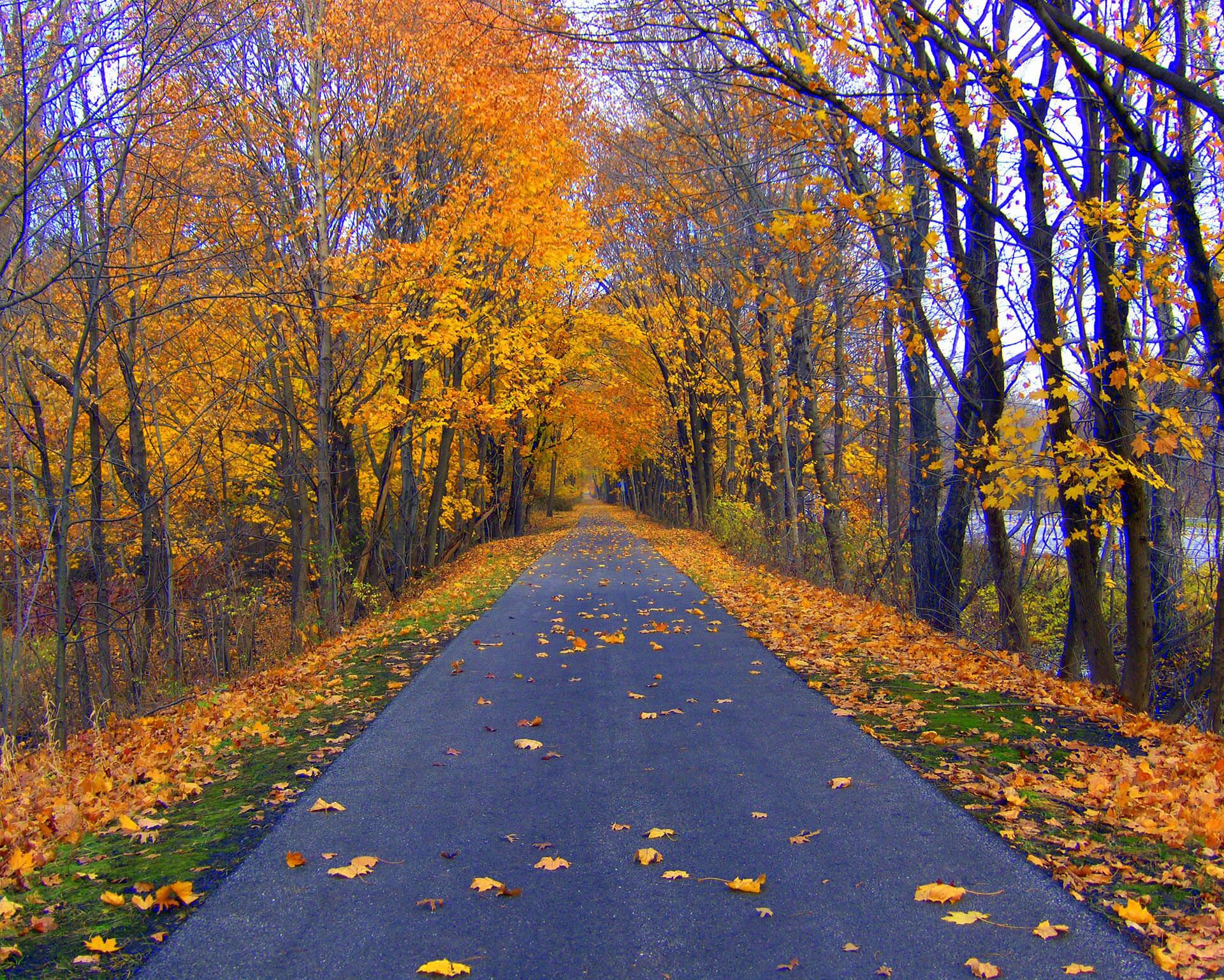 bike path through woods, real estate law mount kisco ny